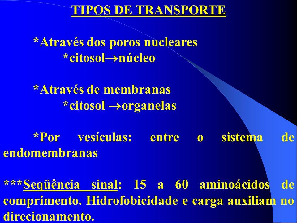TIPOS DE TRANSPORTE *Através dos poros nucleares *citosol  núcleo *Através de membranas *citosol  organelas *Por vesículas: entre o sistema de endom