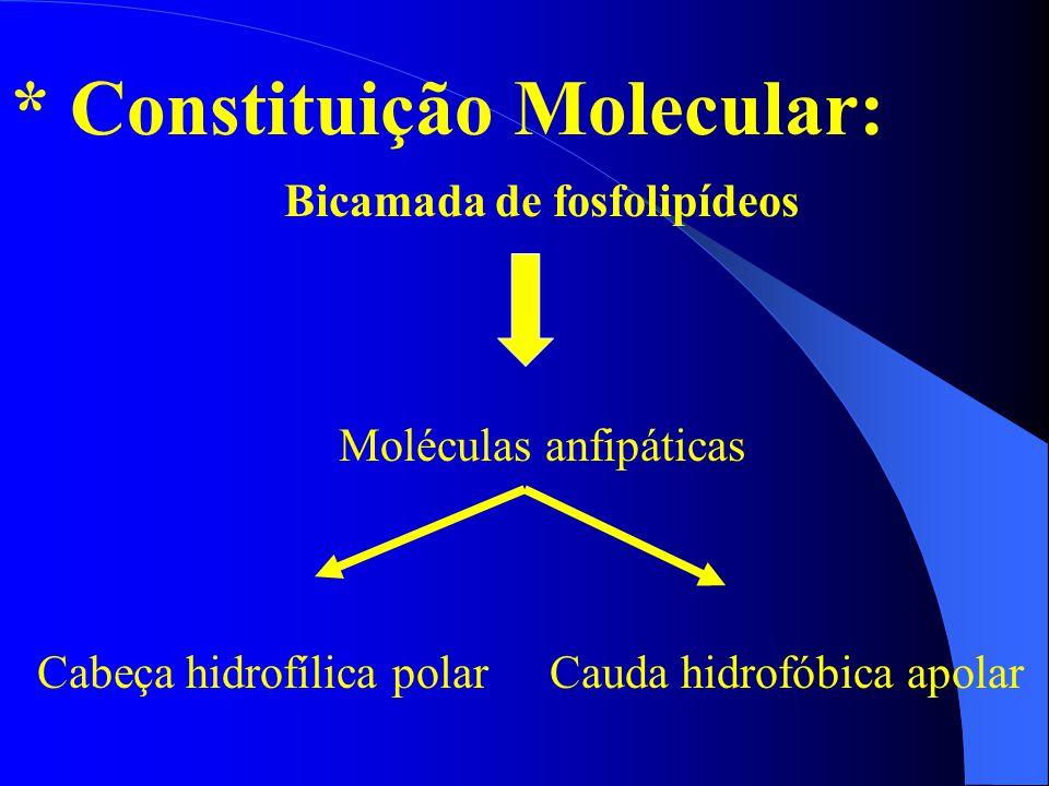 * Constituição Molecular: Bicamada de fosfolipídeos Cauda hidrofóbica apolar Moléculas anfipáticas Cabeça hidrofílica polar