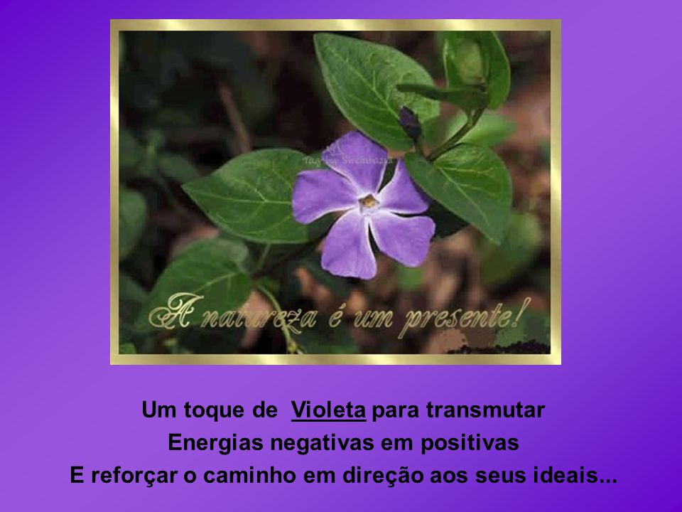 Um toque de Violeta para transmutar Energias negativas em positivas E reforçar o caminho em direção aos seus ideais...
