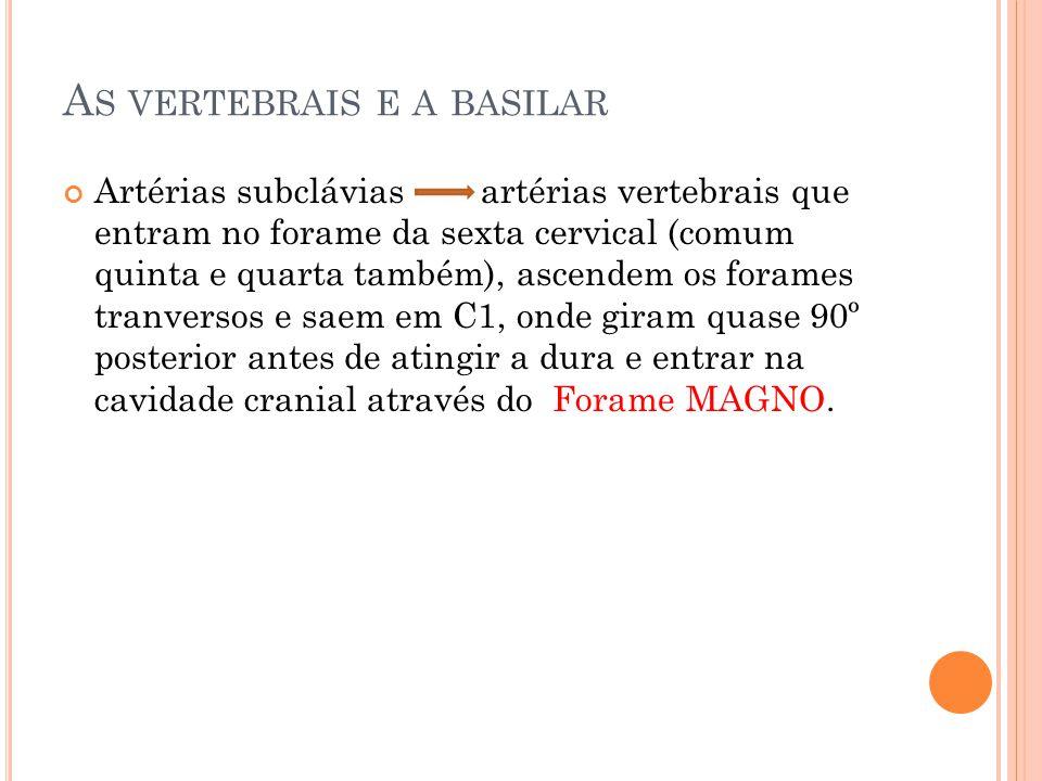 A S VERTEBRAIS E A BASILAR Artérias subclávias artérias vertebrais que entram no forame da sexta cervical (comum quinta e quarta também), ascendem os