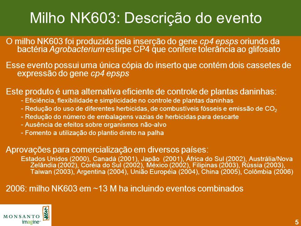 5 Milho NK603: Descrição do evento O milho NK603 foi produzido pela inserção do gene cp4 epsps oriundo da bactéria Agrobacterium estirpe CP4 que confe