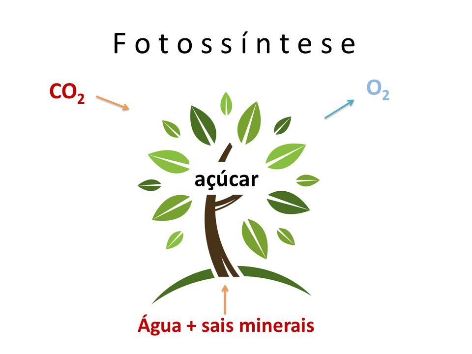 F o t o s s í n t e s e CO 2 Água + sais minerais O2O2 açúcar