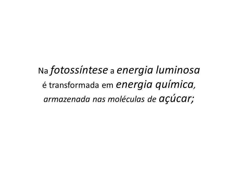 Na fotossíntese a energia luminosa é transformada em energia química, armazenada nas moléculas de açúcar;