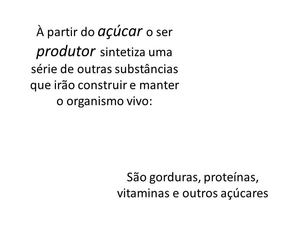 À partir do açúcar o ser produtor sintetiza uma série de outras substâncias que irão construir e manter o organismo vivo: São gorduras, proteínas, vit