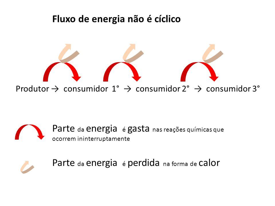 Produtor → consumidor 1° → consumidor 2° → consumidor 3° Parte da energia é gasta nas reações químicas que ocorrem ininterruptamente Parte da energia