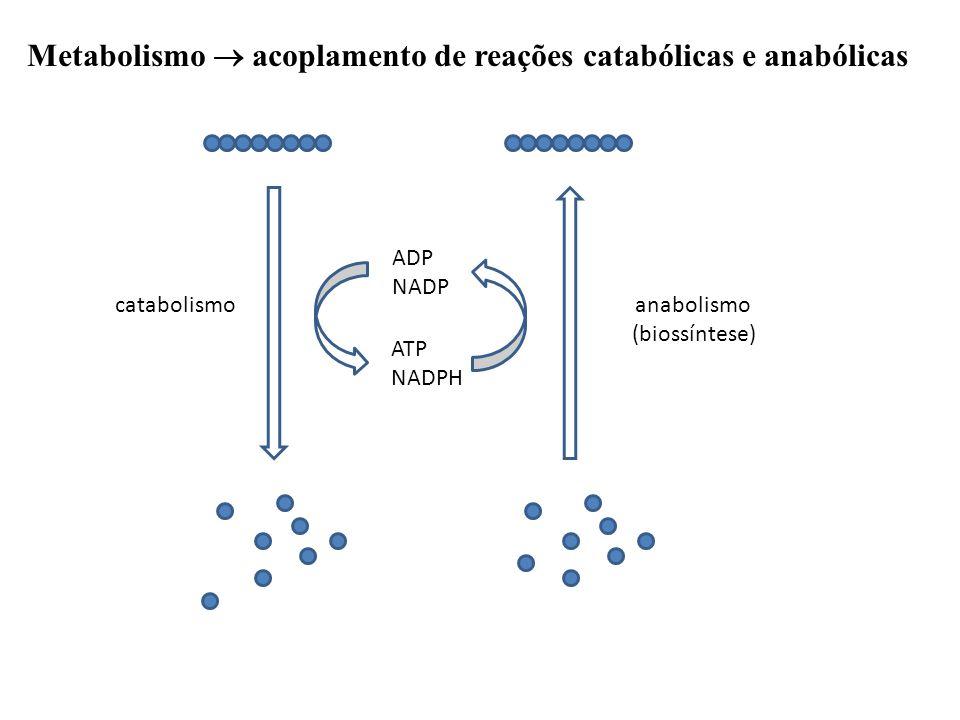 Metabolismo  acoplamento de reações catabólicas e anabólicas catabolismoanabolismo (biossíntese) ADP NADP ATP NADPH