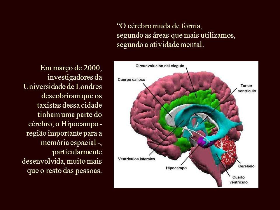 À medida que envelhecemos, nossa atividade mental está mais dominada por essas rotinas cognitivas , pelo piloto automático .