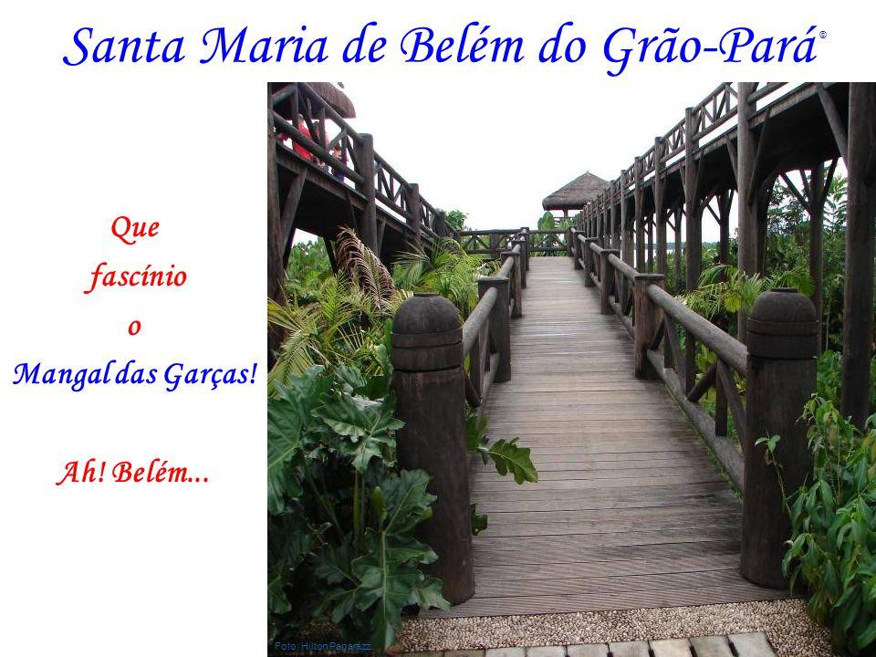 Santa Maria de Belém do Grão-Pará Que fascínio o Mangal das Garças! Ah! Belém... Foto: Hilton Paparazz ©