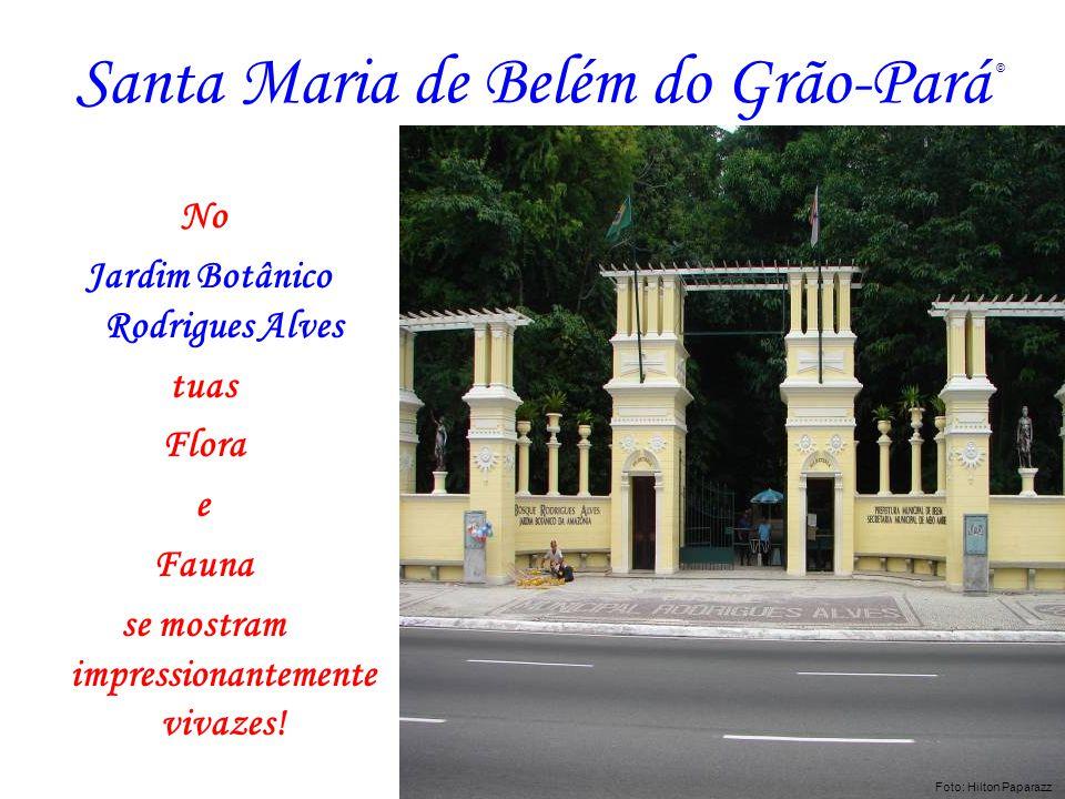 Santa Maria de Belém do Grão-Pará No Jardim Botânico Rodrigues Alves tuas Flora e Fauna se mostram impressionantemente vivazes! Foto: Hilton Paparazz