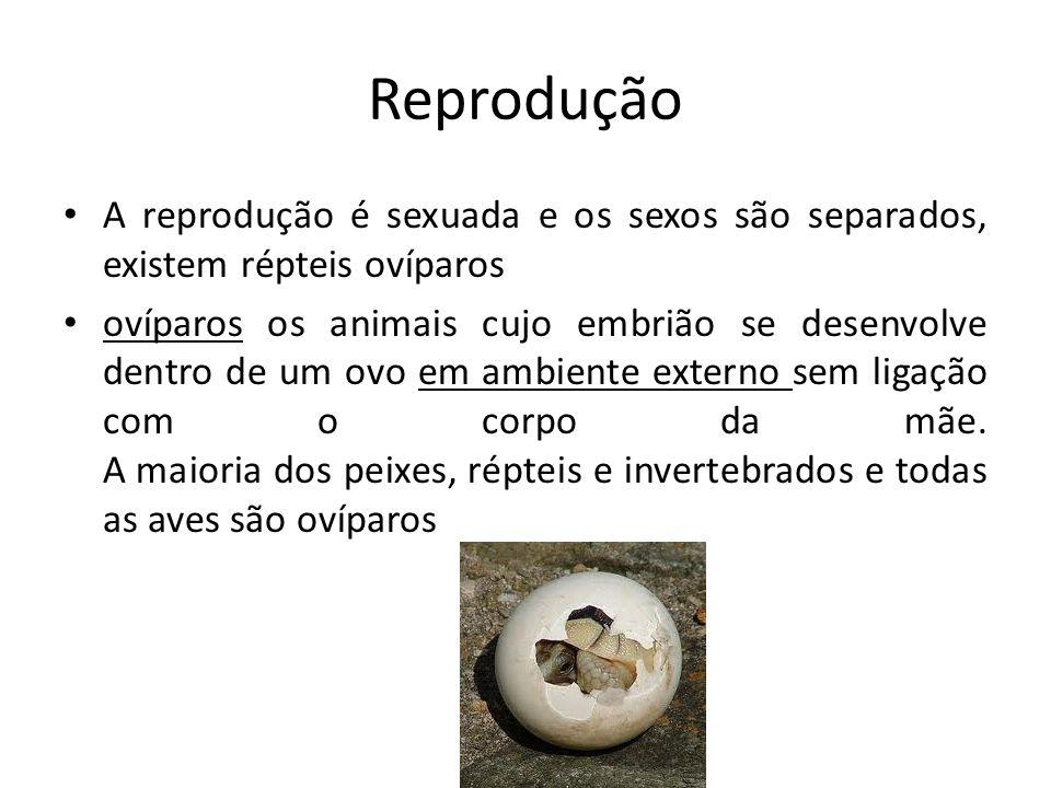 Reprodução A reprodução é sexuada e os sexos são separados, existem répteis ovíparos ovíparos os animais cujo embrião se desenvolve dentro de um ovo em ambiente externo sem ligação com o corpo da mãe.
