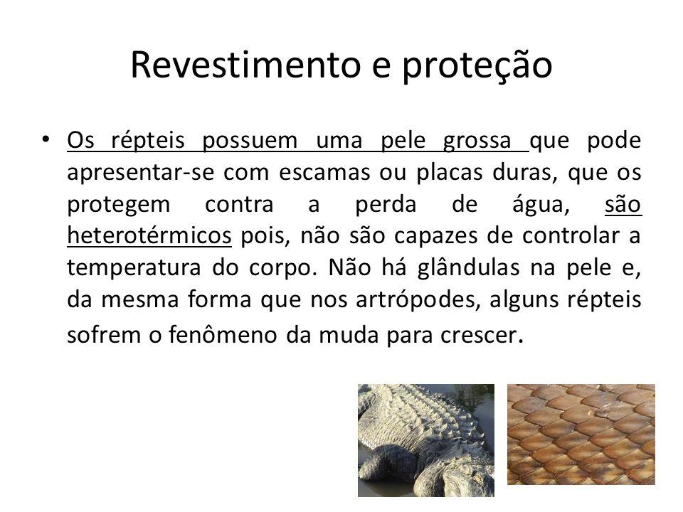 Revestimento e proteção Os répteis possuem uma pele grossa que pode apresentar-se com escamas ou placas duras, que os protegem contra a perda de água, são heterotérmicos pois, não são capazes de controlar a temperatura do corpo.