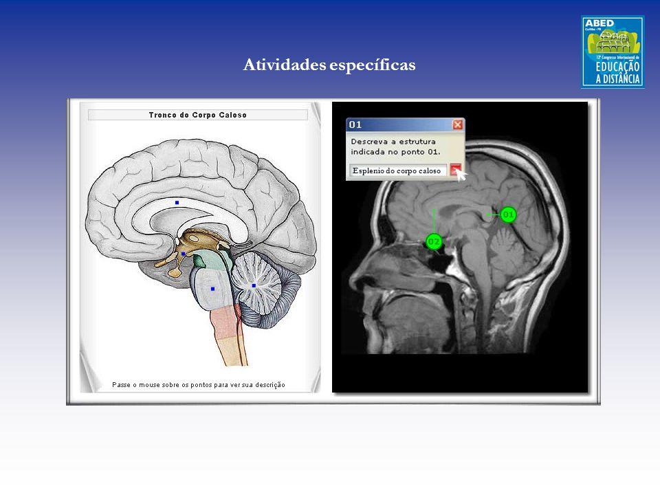 Esplenio do corpo caloso Atividades específicas