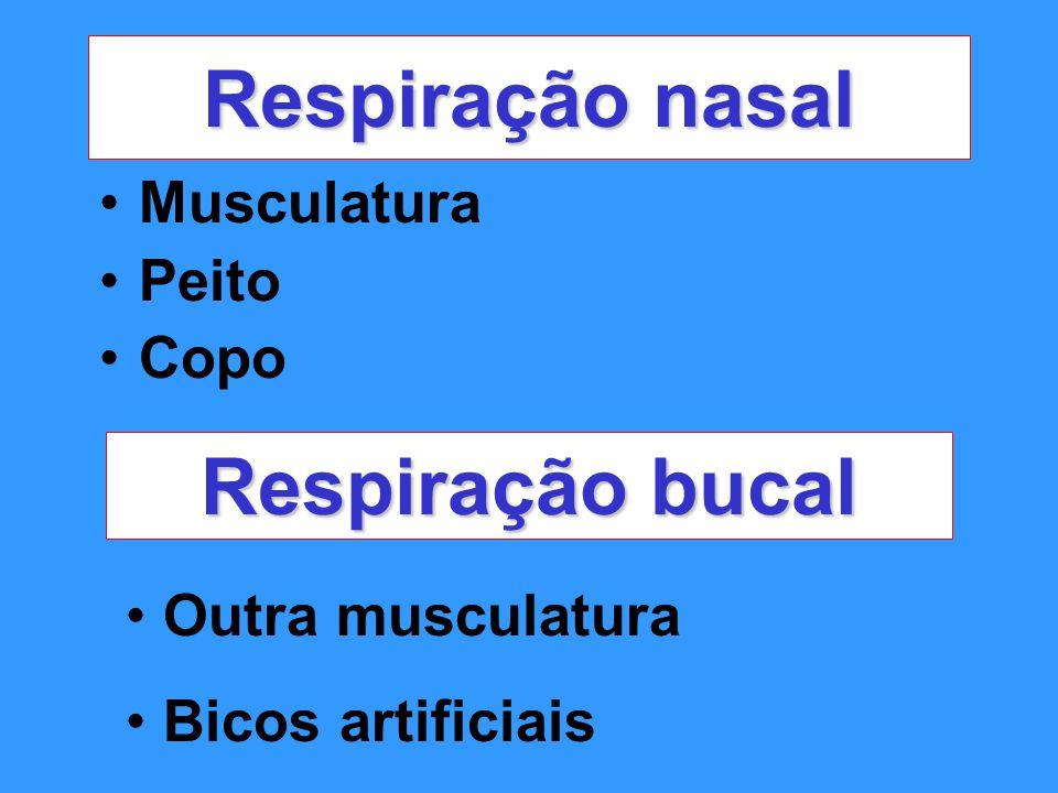 Respiração nasal Musculatura Peito Copo Respiração bucal Outra musculatura Bicos artificiais