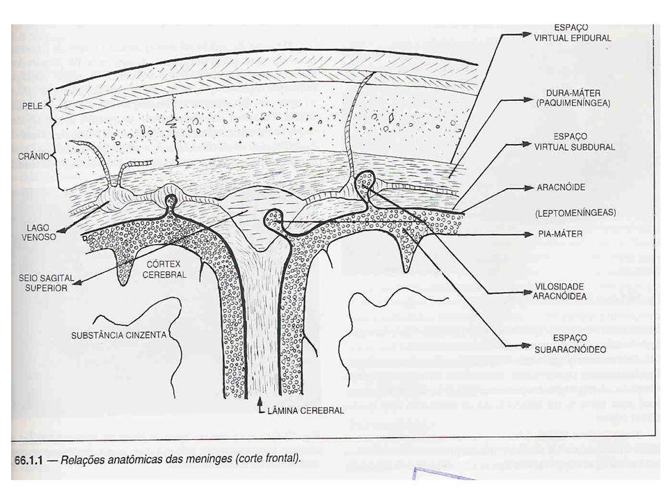 Síndromes do Sistema Nervoso Central Manifestações dependentes: do local anatómico envolvido, da duração da apresentação, da doença subjacente.