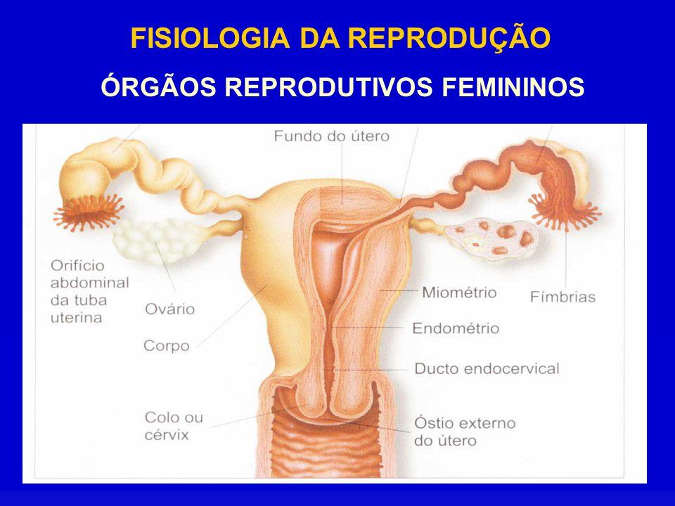 FISIOLOGIA DA REPRODUÇÃO ÓRGÃOS REPRODUTIVOS FEMININOS