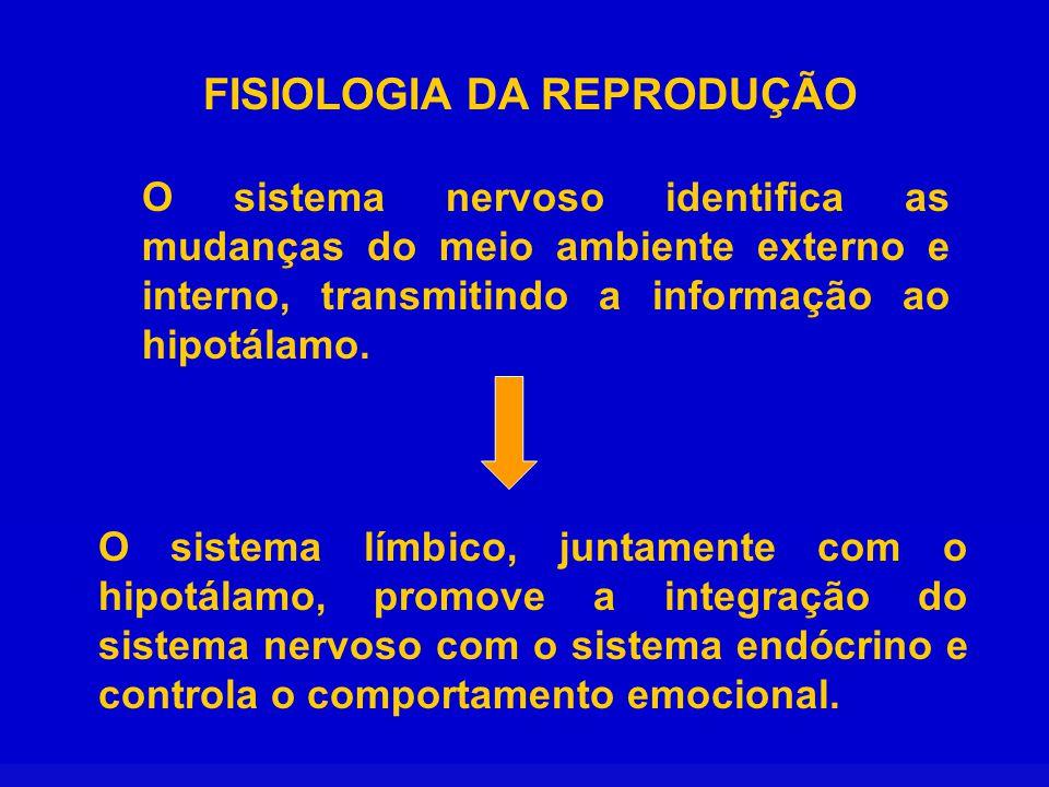 FISIOLOGIA DA REPRODUÇÃO O hipotálamo sintetiza e secreta de forma pulsátil o GnRH que controla a secreção dos hormônios gonadotrópicos (FSH e LH) da hipófise anterior.