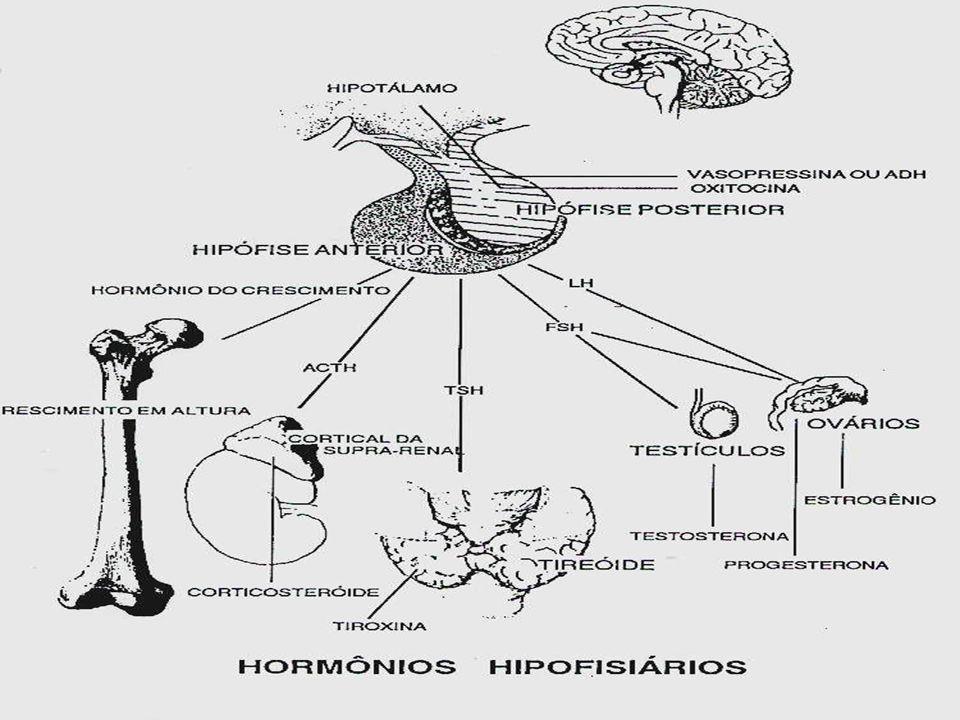 FISIOLOGIA DA REPRODUÇÃO SISTEMA HORMONAL FEMININO  A regulação hormonal se dá por um mecanismo de feedback, em que a produção de hormônios por uma glândula interfere na produção hormonal de outra