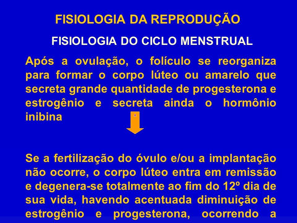 FISIOLOGIA DA REPRODUÇÃO FISIOLOGIA DO CICLO MENSTRUAL