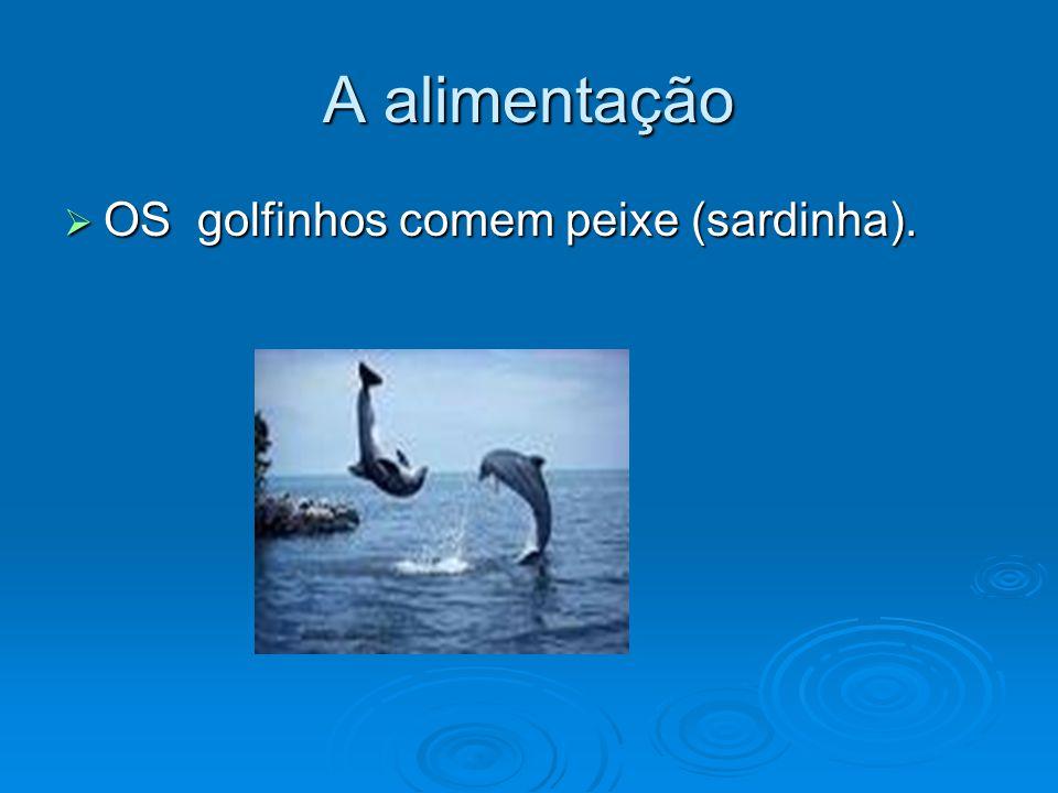 Amamentação:  Os golfinhos são amamentados durante 7 meses.