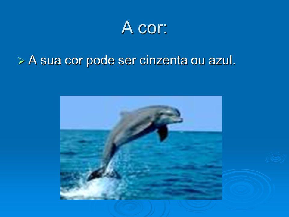 1.A respiração O golfinho respira através de um buraco no meio da cabeça chamado espiráculo.