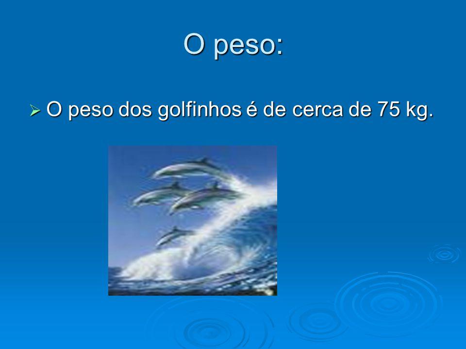 O tamanho:  O tamanho dos golfinhos varia entre 2 a 2,5 metros.