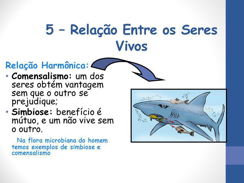 5 – Relação Entre os Seres Vivos Relação Harmônica: Comensalismo: um dos seres obtém vantagem sem que o outro se prejudique; Simbiose: benefício é mút