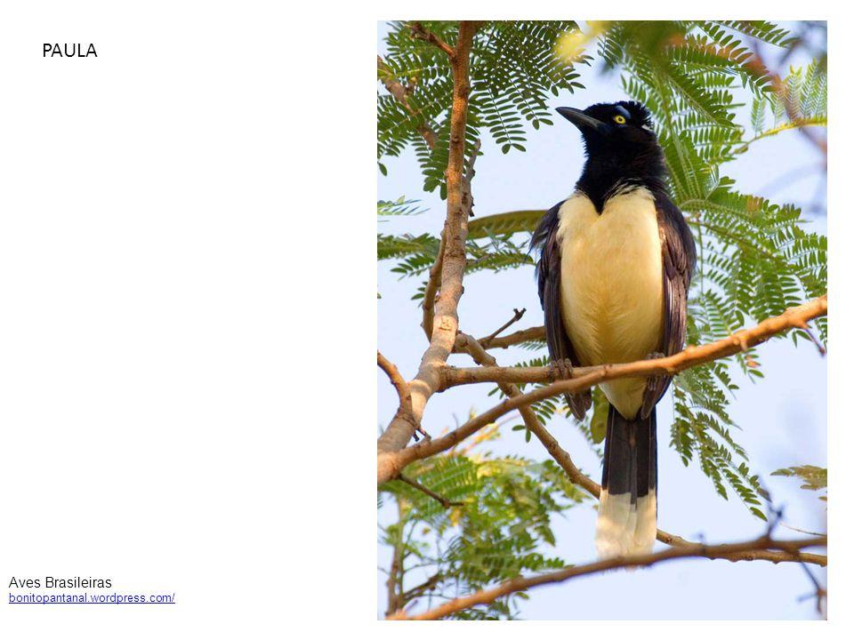 PAULA Aves Brasileiras bonitopantanal.wordpress.com/