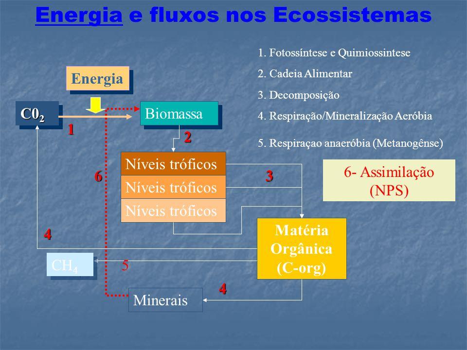 Ciclo do N: Fluxos Globais Numeros em Tg N Fluxos em Tg N yr -1