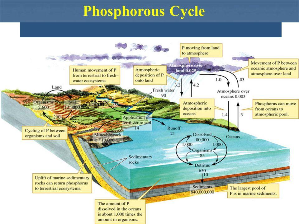 Phosphorous Cycle