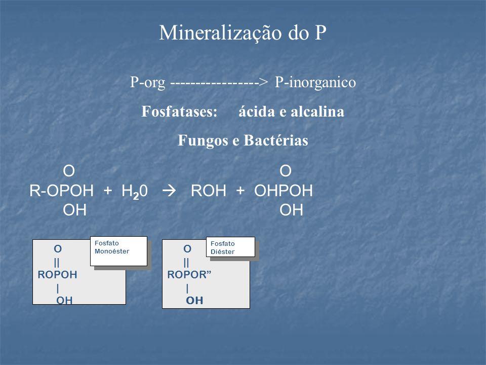 Mineralização do P P-org -----------------> P-inorganico Fosfatases: ácida e alcalina Fungos e Bactérias O R-OPOH + H 2 0  ROH + OHPOH OH OH O || ROPOH | OH Fosfato Monoéster Fosfato Monoéster O || ROPOR | OH Fosfato Diéster Fosfato Diéster