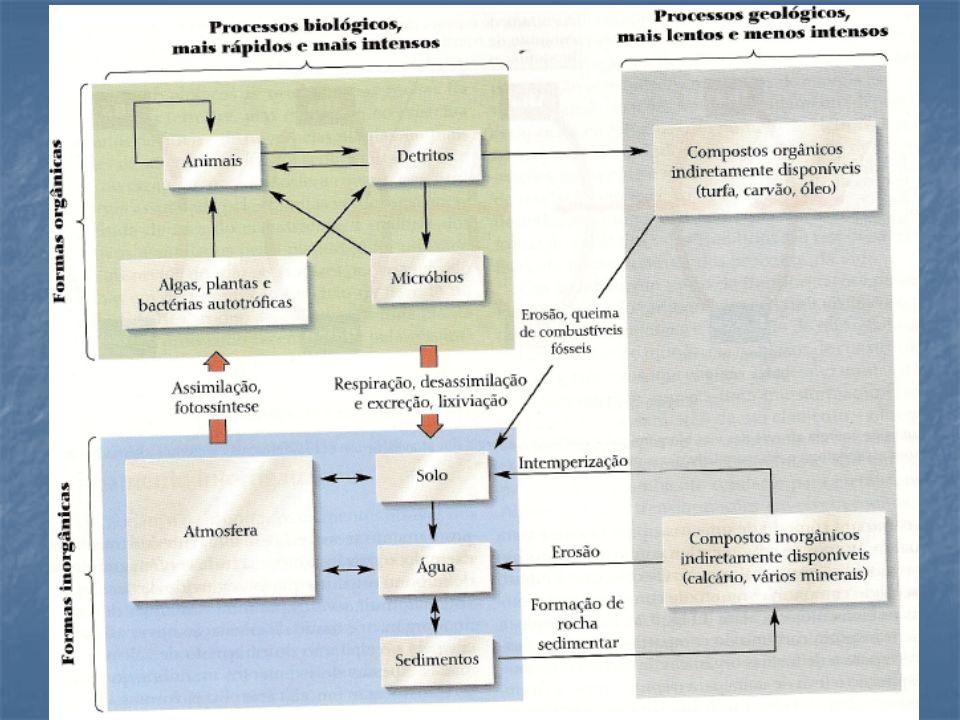 Amonificação: (MIneralizaçao do nitrogênio orgânico) Matéria Orgânica  NH3 Enzimas: desaminases e ureases ureia -  NH3 elevaçao do pH volatilizaçao da amonia (pH > 8) NH3 NH4+ Perda ou remoçao de nirogênio do ecossistema (solo)  atmosfera Em ambientes aquaáticos  toxidez para seres vivos Limites da Legislação (Estadual) --- 20 a 40 mg/l Impacto ambiental  elevado CICLO DO NITROGÊNIO: AMONIFICAÇAO