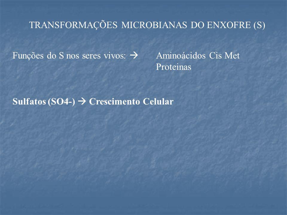 TRANSFORMAÇÕES MICROBIANAS DO ENXOFRE (S) Funções do S nos seres vivos:  Aminoácidos Cis Met Proteinas Sulfatos (SO4-)  Crescimento Celular