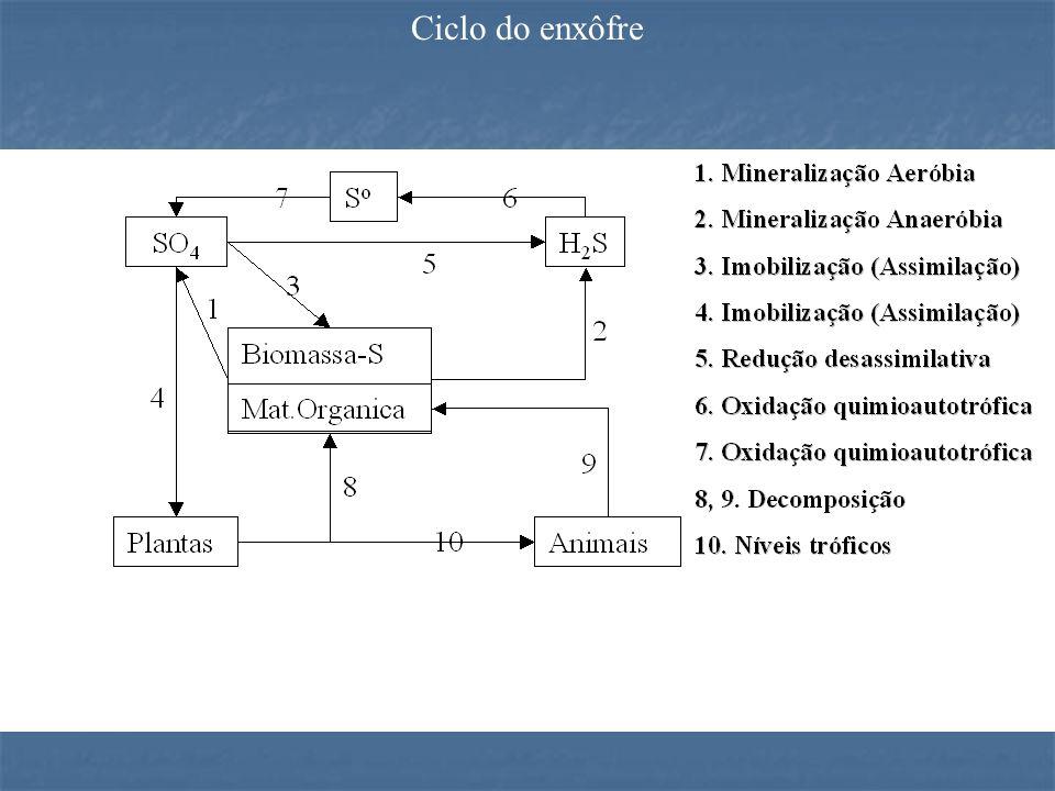 Ciclo do enxôfre