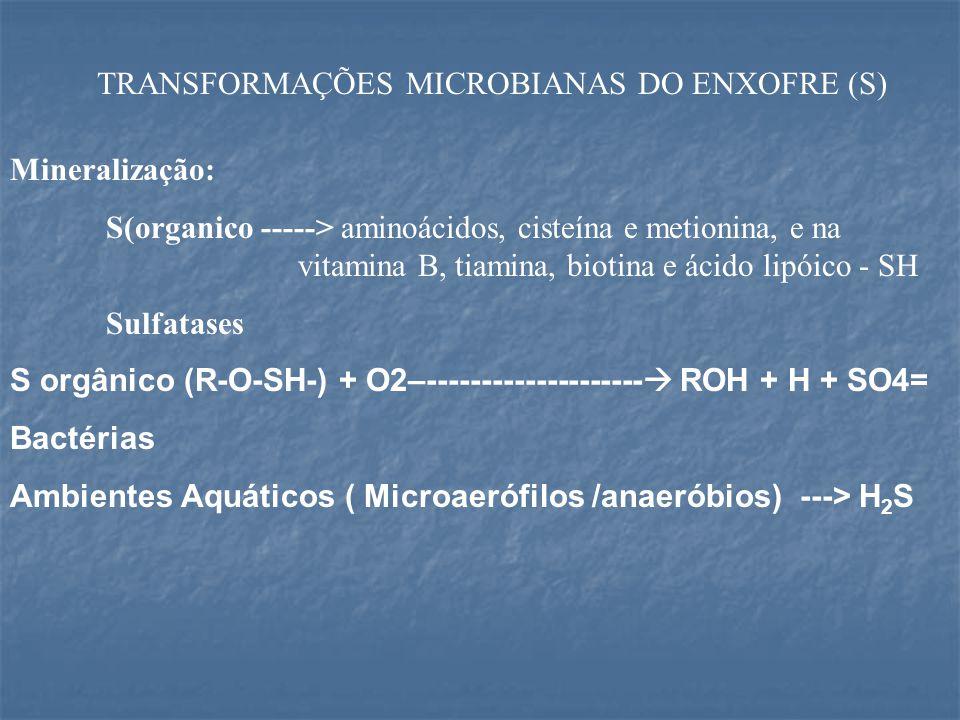 TRANSFORMAÇÕES MICROBIANAS DO ENXOFRE (S) Mineralização: S(organico -----> aminoácidos, cisteína e metionina, e na vitamina B, tiamina, biotina e ácido lipóico - SH Sulfatases S orgânico (R-O-SH-) + O2–--------------------  ROH + H + SO4= Bactérias Ambientes Aquáticos ( Microaerófilos /anaeróbios) ---> H 2 S