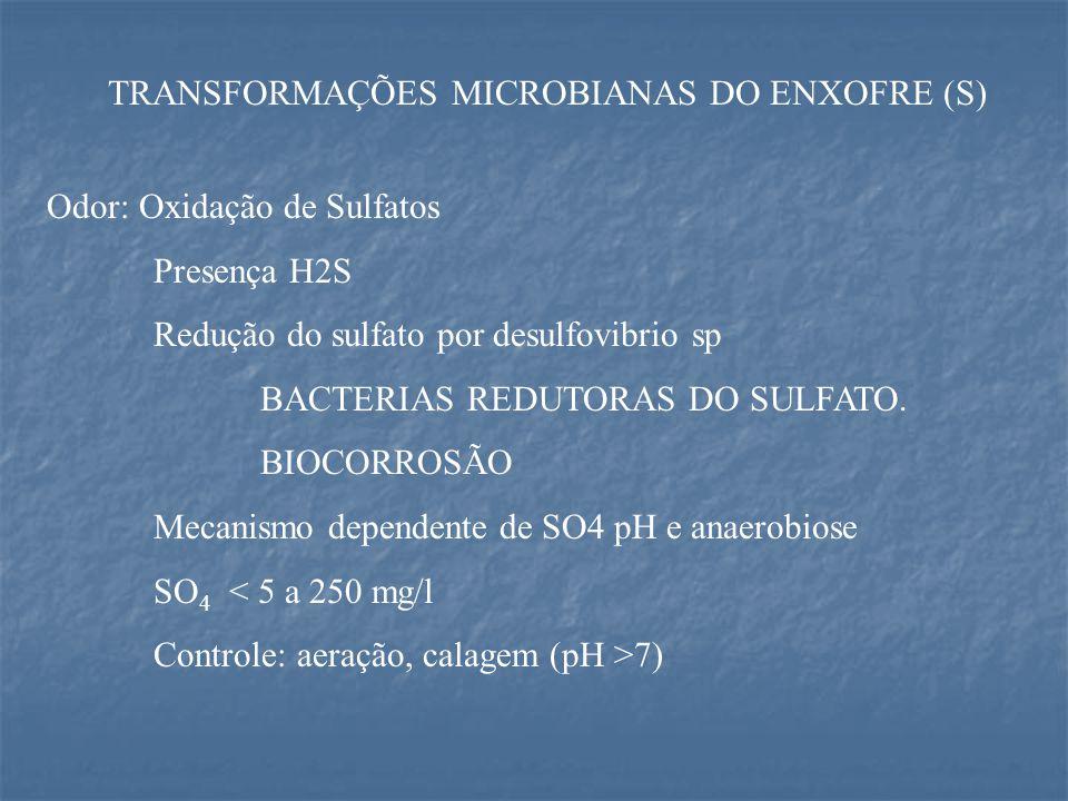 TRANSFORMAÇÕES MICROBIANAS DO ENXOFRE (S) Odor: Oxidação de Sulfatos Presença H2S Redução do sulfato por desulfovibrio sp BACTERIAS REDUTORAS DO SULFATO.