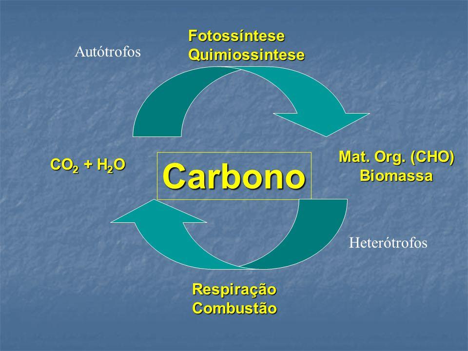 Ciclo de nitrogênio: fixaçao do nitrogênio: Fixaçao Biológica do Nitrogênio: N2  2NH 3 Fixaçao Biológica do Nitrogênio: N2  2NH 3 Forma de adiçao de N em ecossistemas Forma de adiçao de N em ecossistemas Processo natural  Bactérias fixadoras N Processo natural  Bactérias fixadoras N Processo artificial (industrial) N2  NH3 (industria de fertilizantes) Processo artificial (industrial) N2  NH3 (industria de fertilizantes) Em vegetais (soja, feijão) adicionam até 100 kg N hectare por ano Em vegetais (soja, feijão) adicionam até 100 kg N hectare por ano Impacto ambiental  positivo para processos naturais e negativo para adiçáo de fertilizantes Impacto ambiental  positivo para processos naturais e negativo para adiçáo de fertilizantes