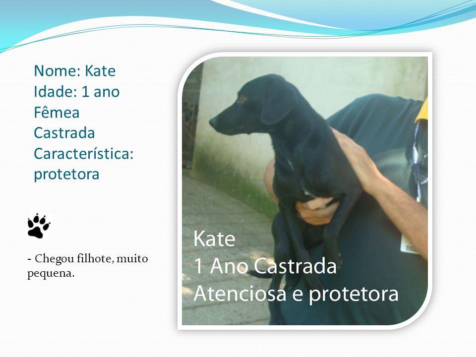 Nome: Kate Idade: 1 ano Fêmea Castrada Característica: protetora - Chegou filhote, muito pequena.