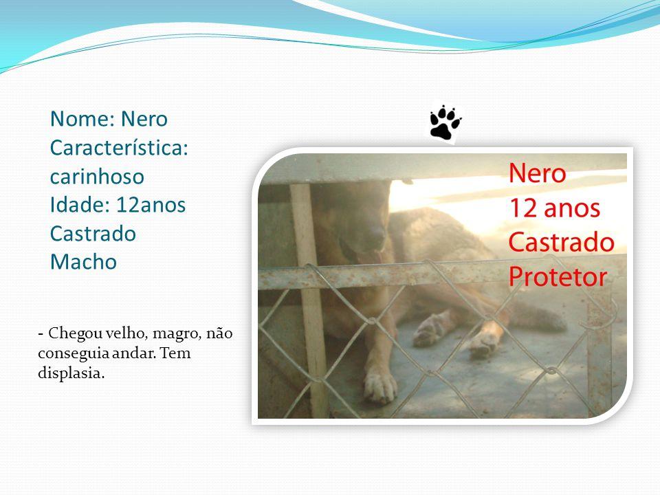Nome: Nero Característica: carinhoso Idade: 12anos Castrado Macho - Chegou velho, magro, não conseguia andar.