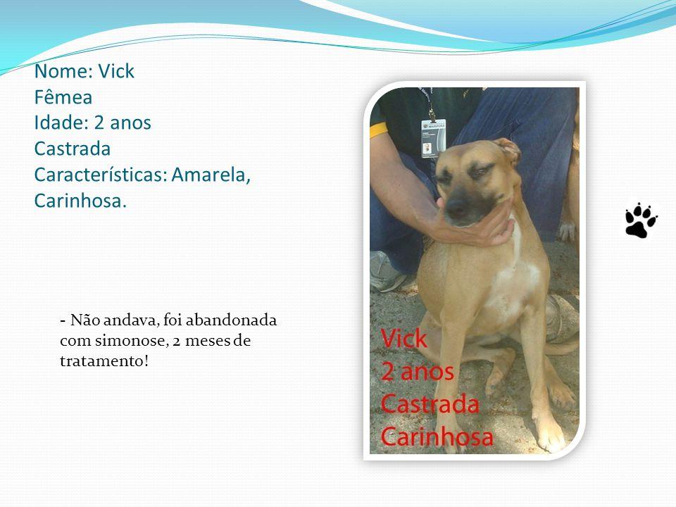 Nome: Vick Fêmea Idade: 2 anos Castrada Características: Amarela, Carinhosa.