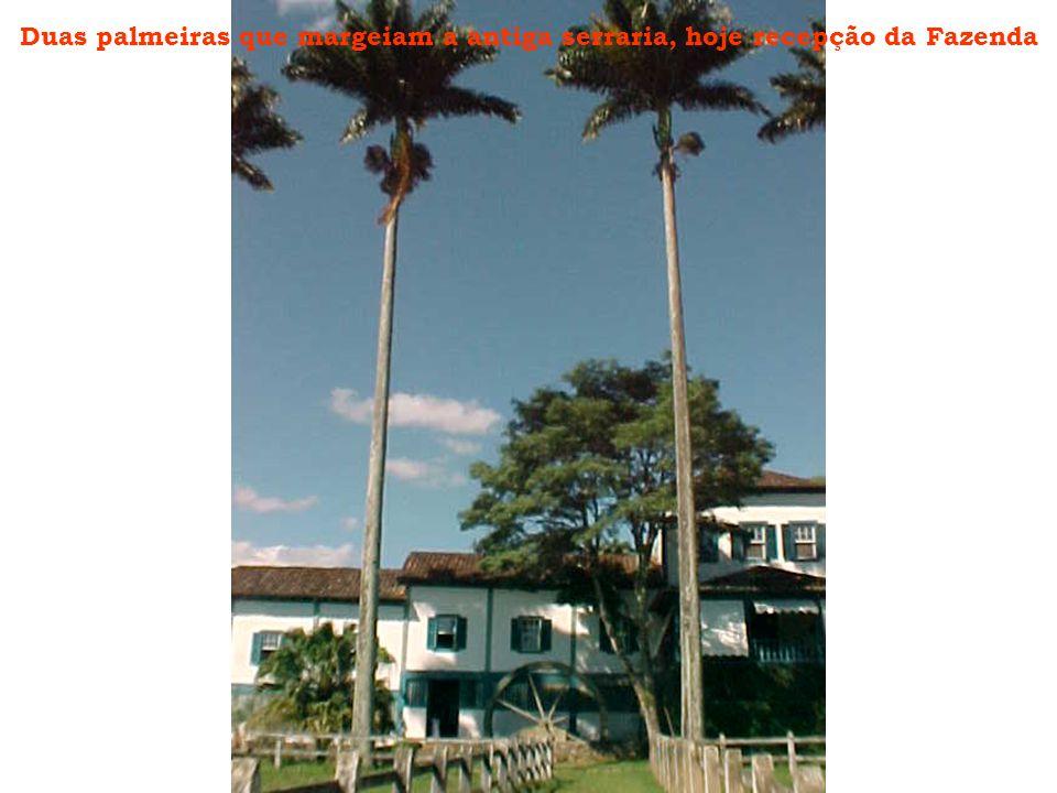 Duas palmeiras que margeiam a antiga serraria, hoje recepção da Fazenda