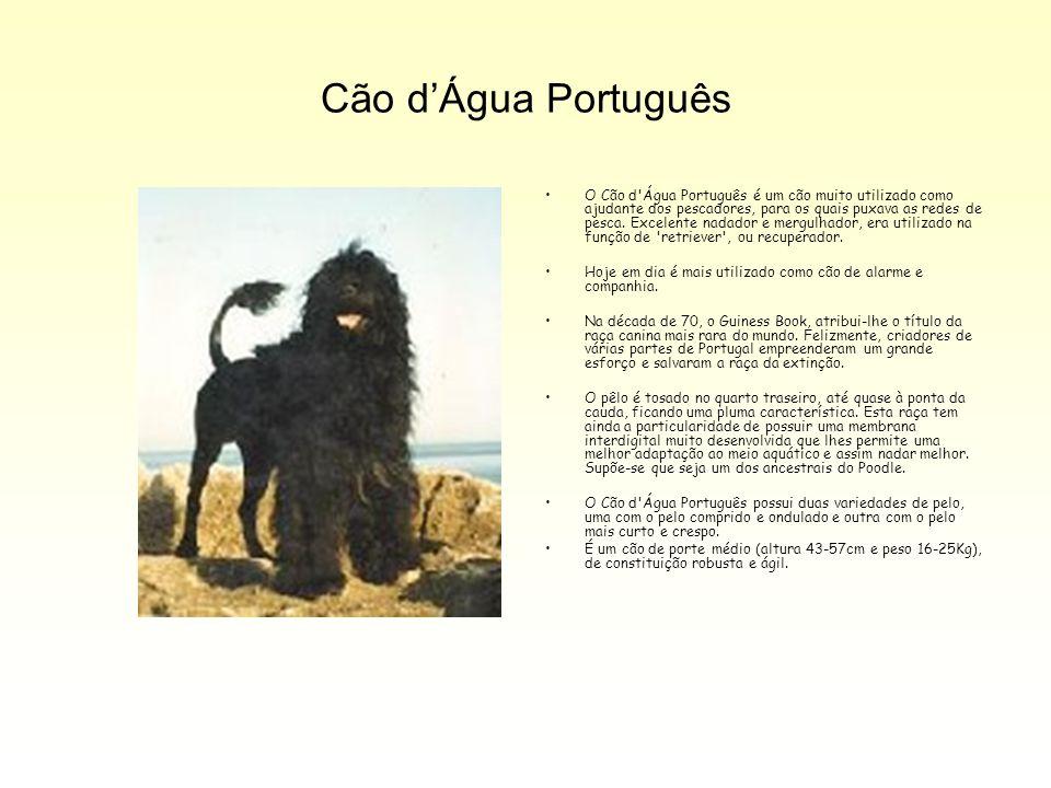 Cão d'Água Português O Cão d'Água Português é um cão muito utilizado como ajudante dos pescadores, para os quais puxava as redes de pesca. Excelente n