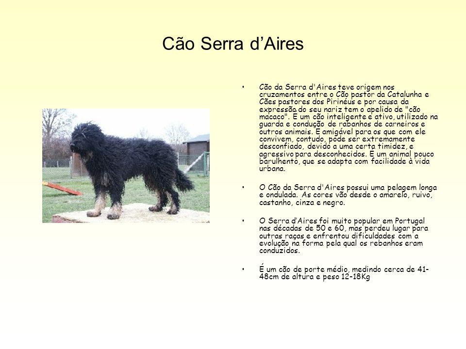 Cão Serra d'Aires Cão da Serra d'Aires teve origem nos cruzamentos entre o Cão pastor da Catalunha e Cães pastores dos Pirinéus e por causa da express