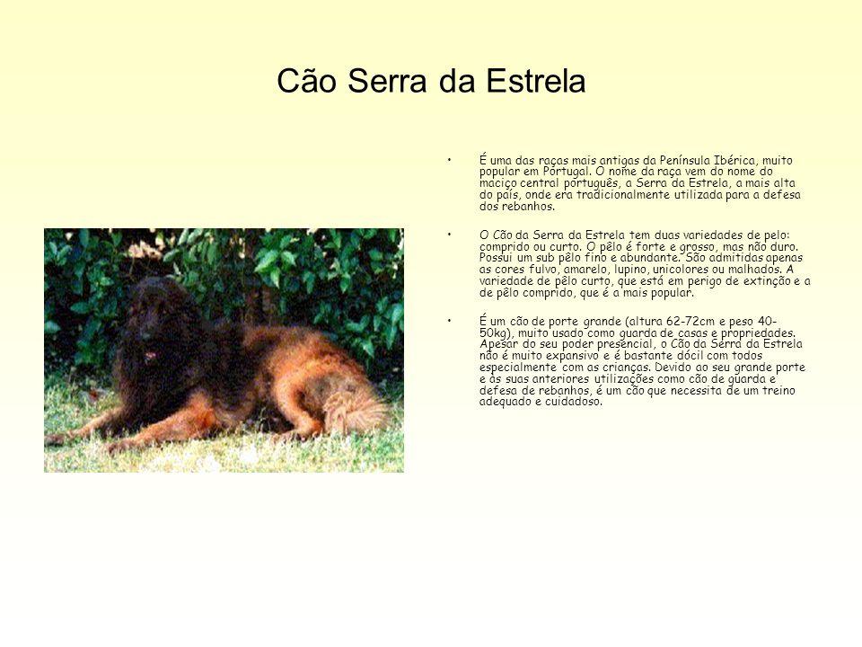 Cão Serra da Estrela É uma das raças mais antigas da Península Ibérica, muito popular em Portugal. O nome da raça vem do nome do maciço central portug