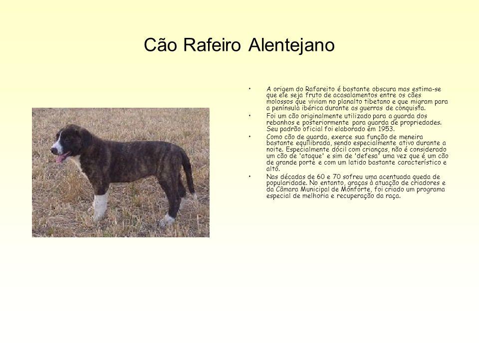 Cão Rafeiro Alentejano A origem do Rafareito é bastante obscura mas estima-se que ele seja fruto de acasalamentos entre os cães molossos que viviam no