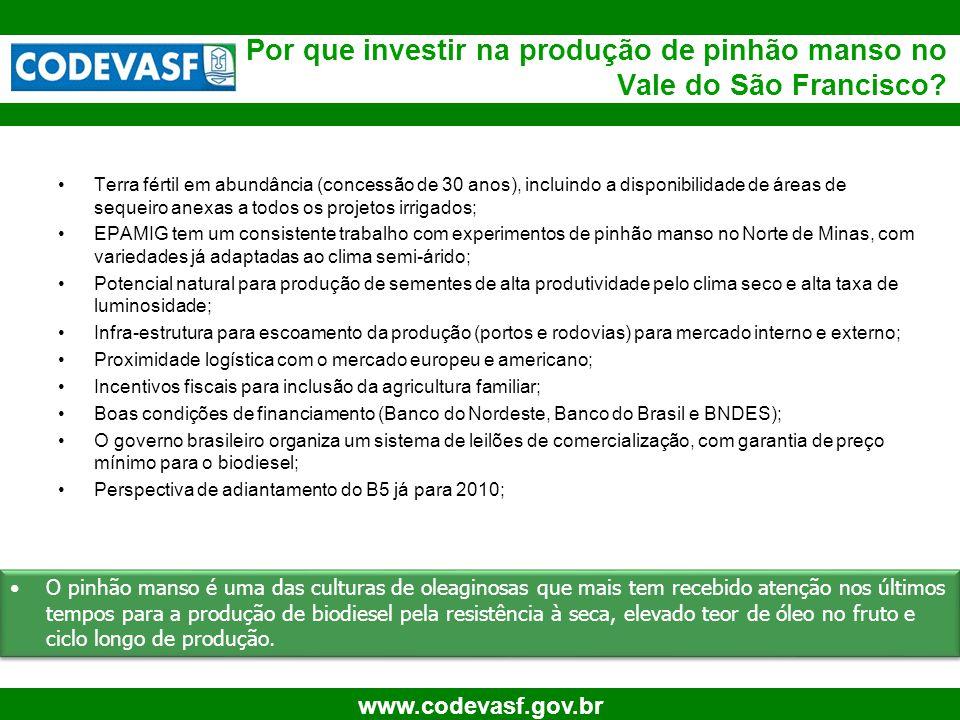 46 www.codevasf.gov.br Por que investir na produção de pinhão manso no Vale do São Francisco? Terra fértil em abundância (concessão de 30 anos), inclu