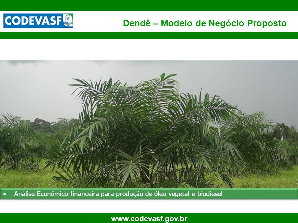58 www.codevasf.gov.br SÍNTESE (Cultura estabilizada) Biodiesel (100%) Área Produtora (ha(s)) ==>50.000,00 Agrícola Industrial FRUTOSFRUTOS ReceitaR$ Vendas Brutas Totais 63.000.000 Custos de Produção 43.440.000 BIODIESEL 100 % ReceitaR$ Venda Bruta Total (Óleo litros) 127.391.269 Custos de Processamento 22.277.749