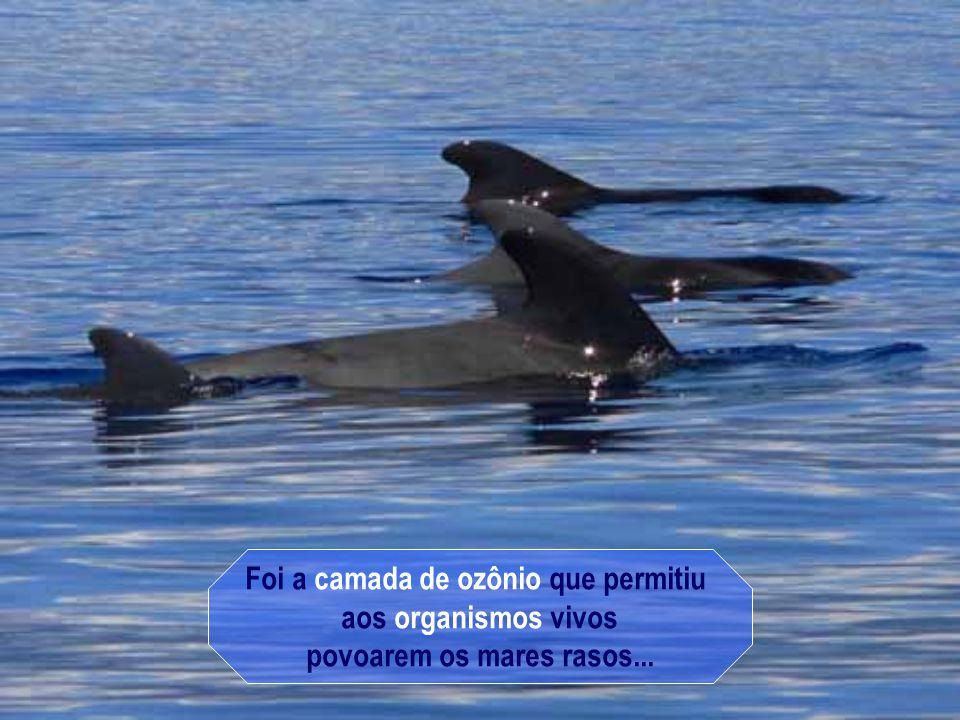 TEXTO E FORMATAÇÃO – rose.acaciana@gmail.com PESQUISA – ALMIRANTE GAMA E SILVA SOM – MAKSIM - CLAUDINE