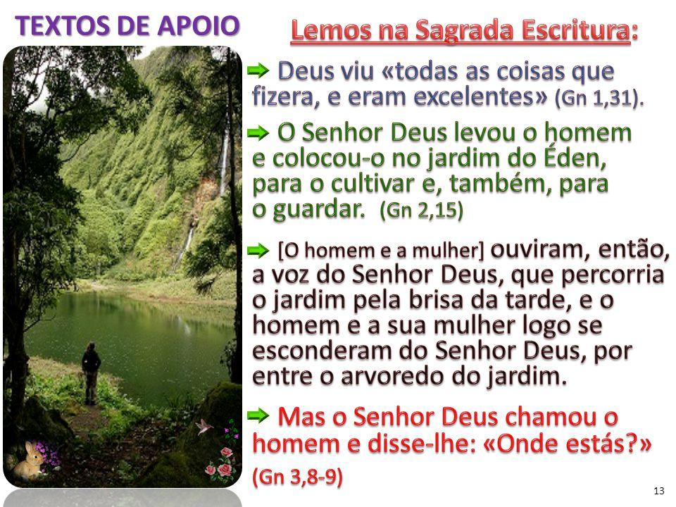 13 TEXTOS DE APOIO