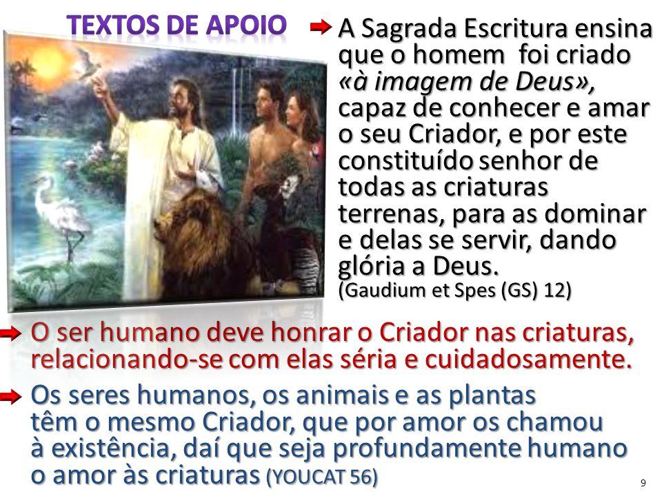 9 O ser humano deve honrar o Criador nas criaturas, relacionando-se com elas séria e cuidadosamente.