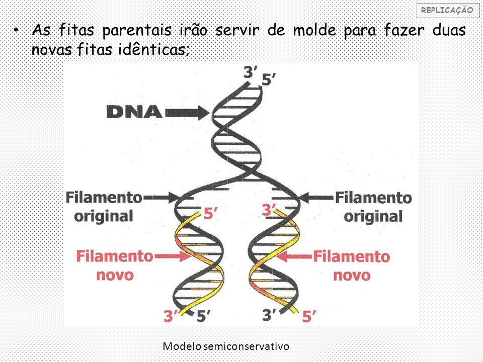 REPLICAÇÃO As fitas parentais irão servir de molde para fazer duas novas fitas idênticas; Modelo semiconservativo